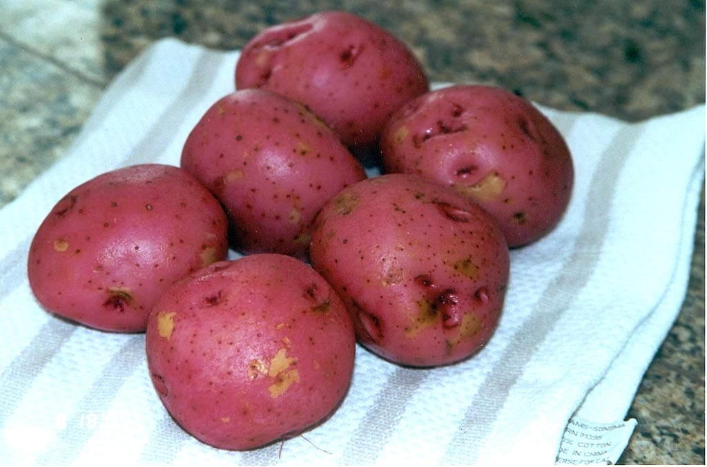 Six red potatoes